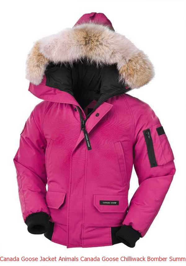 598446dcb54 Canada Goose Jacket Animals Canada Goose Chilliwack Bomber Summit Pink  Youth s For Sale